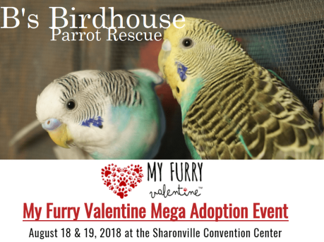 MVF facebook event